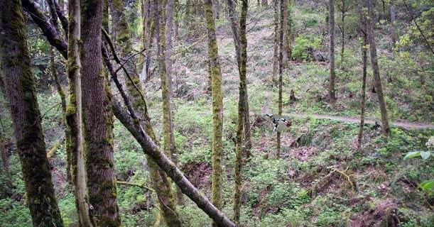 5 Best Mountain Biking Trails Around Portland