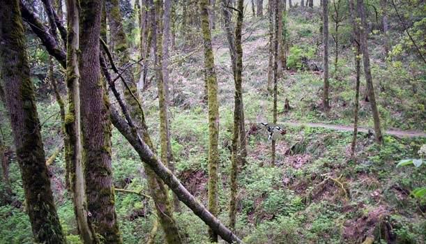 Mountain Biking Paths in Portland, Oregon Forest Park